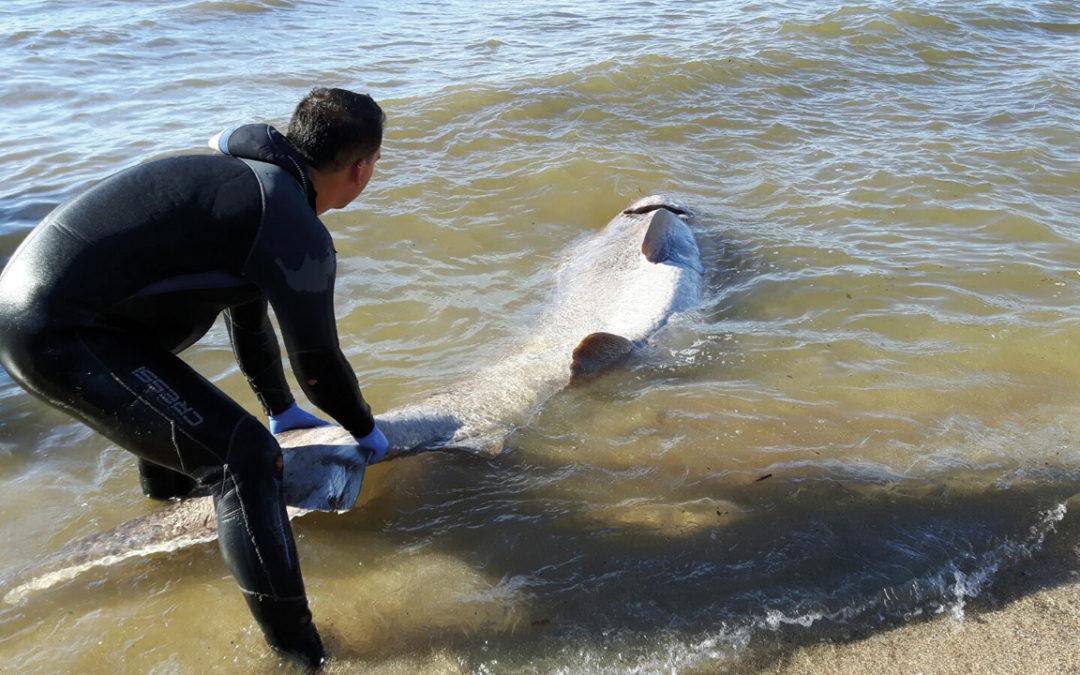 Descubre la falsa reputación de los tiburones en este video.