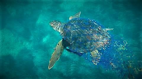 ¿Qué tenemos que hacer si encontramos una tortuga marina?