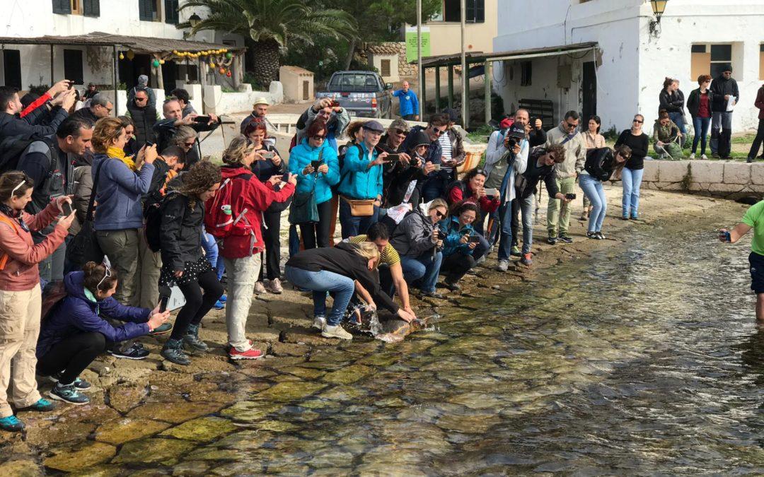 Suelta de tortugas marinas en Cabrera junto a los participantes del Congreso Medpan