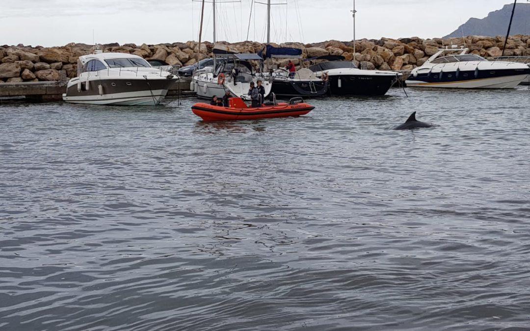 ¿Los delfines pueden sentir el dolor de un duelo?
