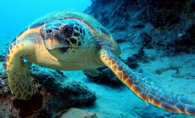 ¿Conoces los diferentes picos de tortugas marinas?