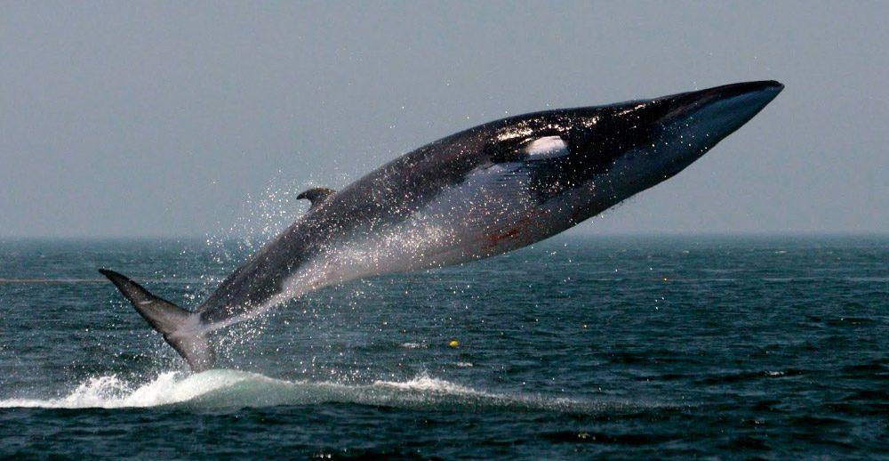 ¿Qué sabes de las ballenas y delfines que habitan en nuestro mar?